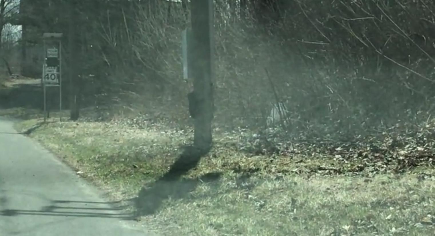 2021 04 05 2 - Vídeo divertido de uma mamãe urso lutando para levar quatro filhotes para o outro lado da estrada