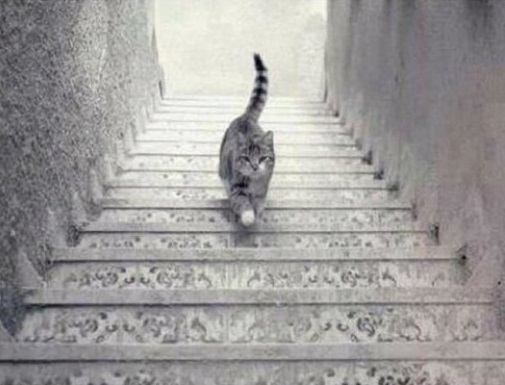 enigma do gato ele esta subindo ou descendo a escada a resposta revela sobre sua personalidade - Enigma do Gato: Ele está subindo ou descendo a escada? A resposta revela sobre sua personalidade