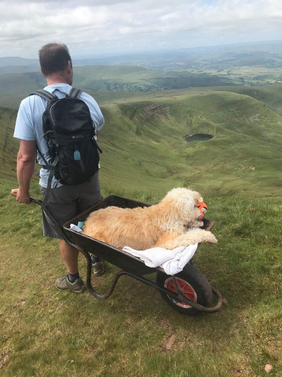 """homem leva seu cao doente em um carrinho de mao ate sua montanha favorita para uma ultima aventura 2 scaled - Homem leva seu cão doente em um carrinho de mão até sua montanha favorita para """"uma última aventura"""""""