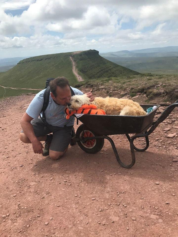 """homem leva seu cao doente em um carrinho de mao ate sua montanha favorita para uma ultima aventura 4 - Homem leva seu cão doente em um carrinho de mão até sua montanha favorita para """"uma última aventura"""""""