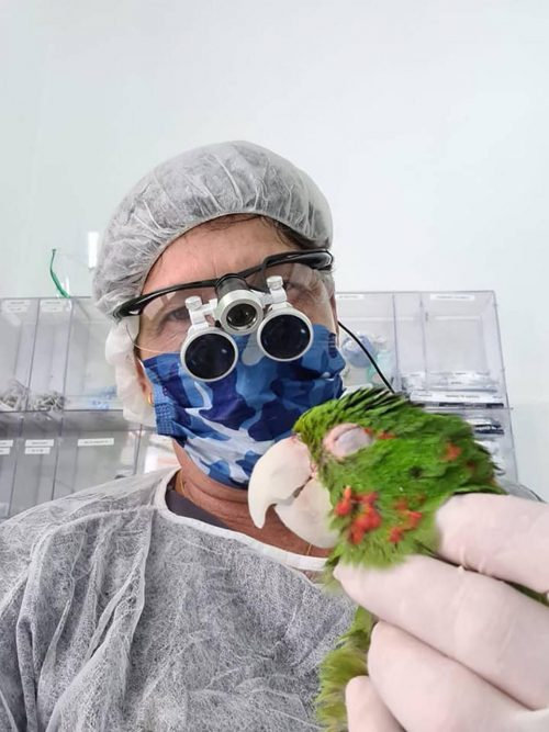 papagaios resgatados ganham nova vida gracas a reconstrucao do bico totalmente feito a mao 3 - Papagaios resgatados ganham nova vida graças à reconstrução do bico totalmente feito à mão